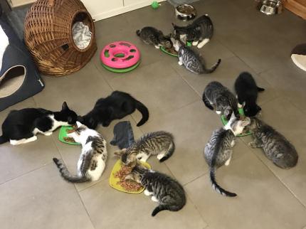 Ftterungszeit im Kittenzimmer